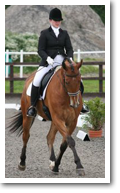 Equine Sports Massage - Testimonial Picture - Lisa and Caesar