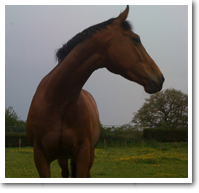 Equine Sports Massage - Testimonial Picture - Julie and Charlie